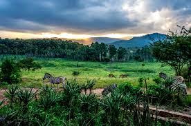 Travel clinic Swaziland
