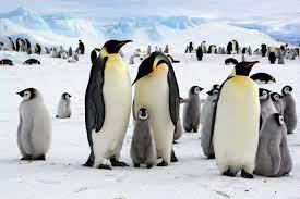 Travel clinic Antarctica