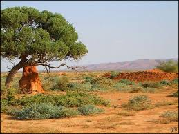 Travel clinic Somalia